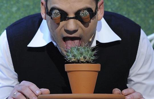 Cactus taster