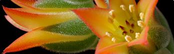 Cactus&Co.