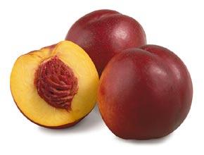 Frutti indeiscenti